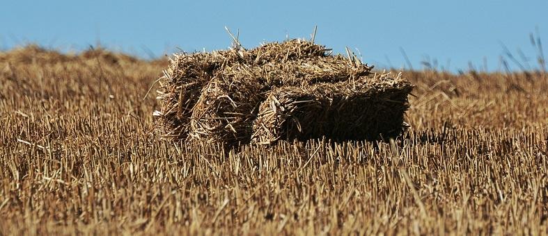 Agroecología: futuro de la sostenibilidad y el autoempleo