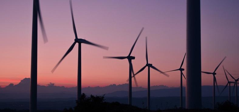 Green Management: Avanzando hacia Marcas Verdes