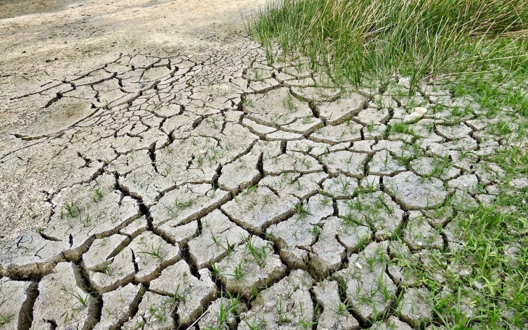 Las naciones llevan adelante las acciones mundiales por el clima en la Conferencia de las Naciones Unidas sobre el Cambio Climático de 2016
